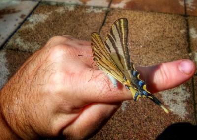 dito sostiene farfalla